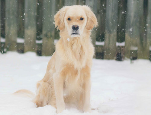 Protect Pets from Frostbite