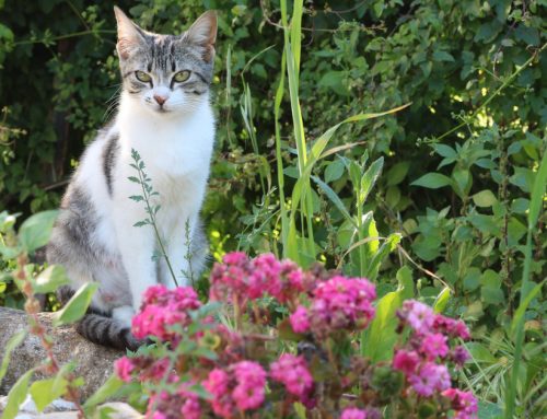 Create a Cat-Friendly Garden