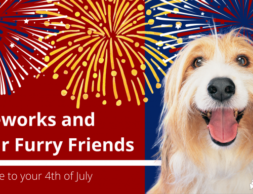 Fireworks and Your Furry Friends: A Guide to your 4th of July
