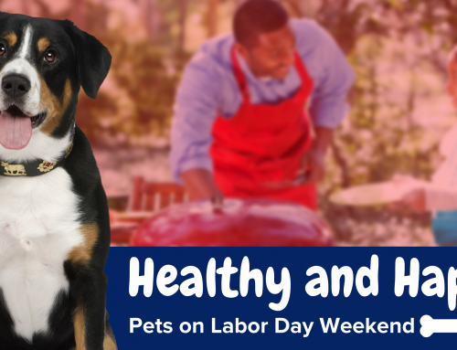 Healthy and Happy Pets on Labor Day Weekend