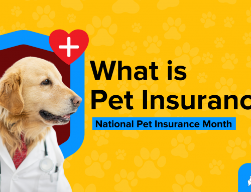 What is Pet Insurance Month